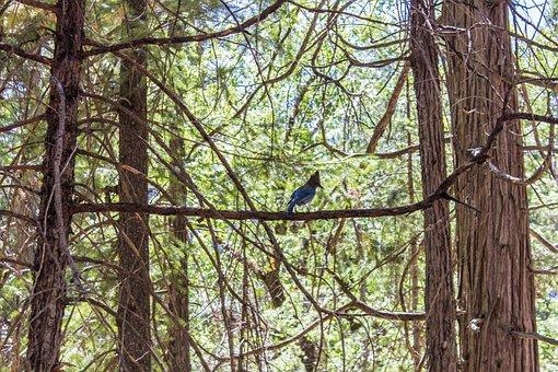 Forest, Bird, Woodpecker, Blue, Trees, Natural, Branch