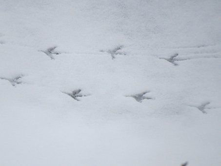Snow, Traces, Footprints, White, Winter, Cold, Defrost