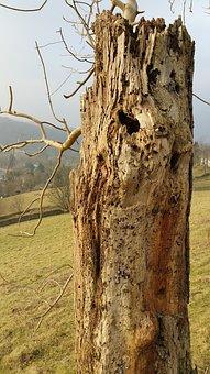 Woodpecker, Tree, Bird, Nature, Wildlife, Forest, Wood