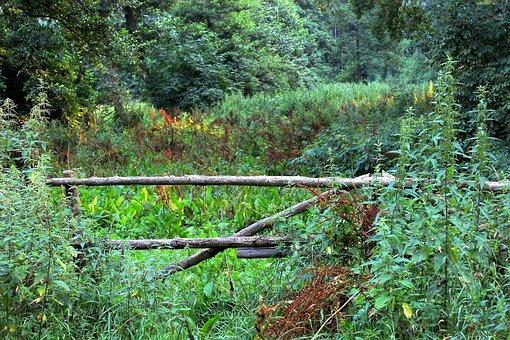 Field, Goal, Nature, Garden Gate, Wild, Hedge, Shrubs
