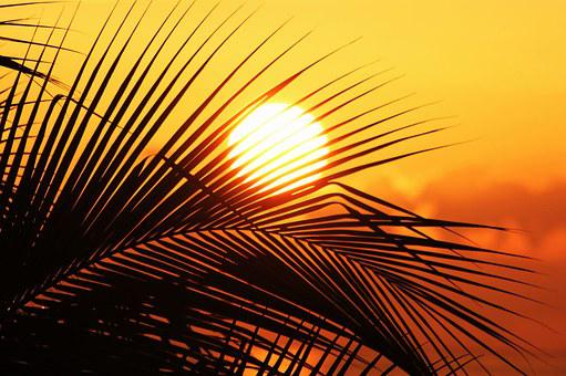 Sun Of Jamaica, Sun, Sunset, Sky, Palm And Sun, Romance