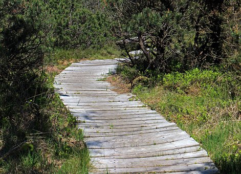 Path, Wooden Track, Away, Plank Road, Planks