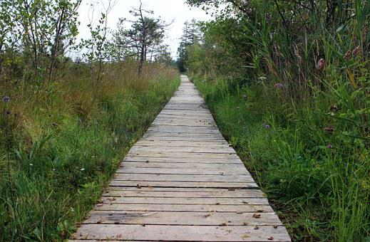 Wooden Track, Nature, Away, Plank Road, Wood Planks