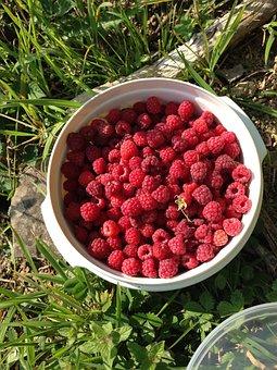 Raspberry, Wild Raspberry, Berry, Red, Fruit, Harvest