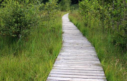 Wooden Track, Away, Path, Trail, Planks, Web, Nature