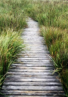 High Fens, Away, Plank Road, Wooden Track, Nature
