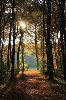 Autumn, Forest, Autumn Forest, Backlighting, Sun