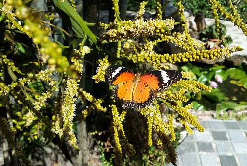 Butterfly, Nature, Plants, Insects, Garden