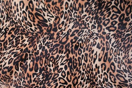 A Leopard, Leather, Chiba, Leather Texture, Texture