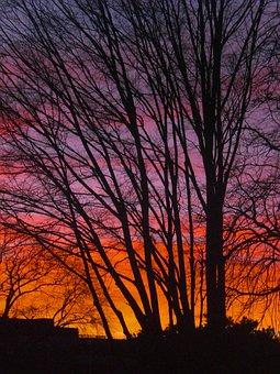 Trees, Sunset, Twilight, Evening Sun, Mood, Silhouette