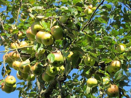Apple, Summer, Garden, Healthy, Apple Tree