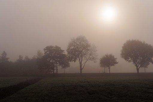 November Day, Cold, Foggy, Autumn, Hoarfrost, Trees