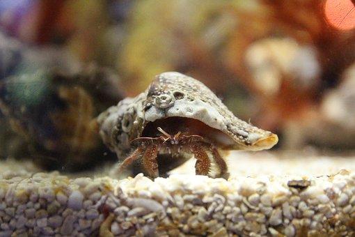 Crab, Fish, Sea Creatures, Marine Life, Sea, Fishes