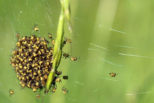 Spin, Arachnids, Close, Small Spider, Network, Nest