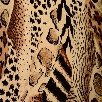 Animal Pattern, Design, Print, Texture, Cheetah, Zebra