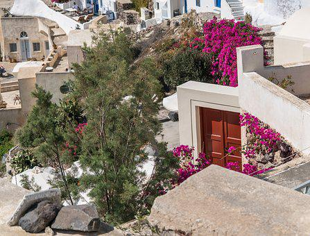 Santorini, Oia, Greece, Flowers, Red Door Travel