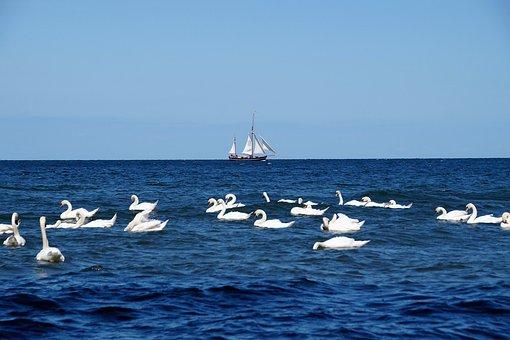 Sea, Sailing Boat, Swans, Ship, The Baltic Sea