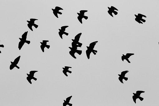 Pigeons, Birds, Flock, Doves, Animals, Freedom, Fly