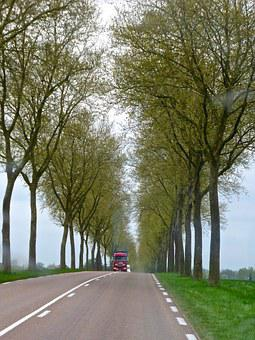 Road, Colonade, Trees, Distant, Perspective, Country