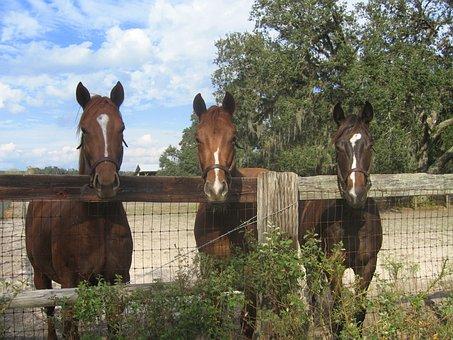 Horses, Farm, Fence, Country, Animal, Nature, Stallion