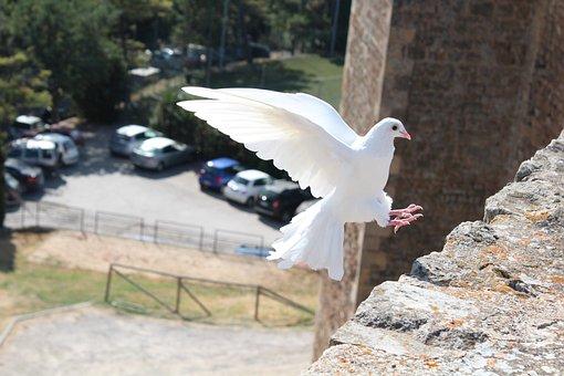 Bird, Dove Of Peace, Dove, Peace, White, Symbol, Pigeon