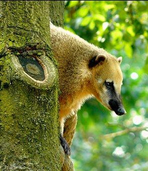 Animal, Nature, Animals, Bear, Fur, Animal World, Tree