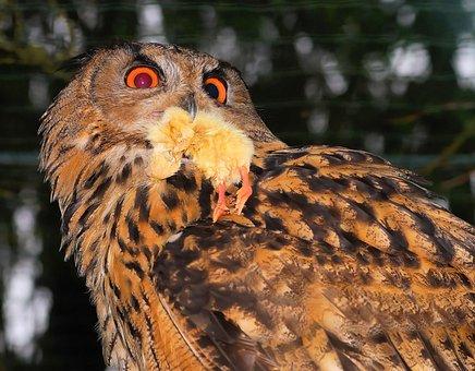 Owl, Plumage, Forest, Bird, Mystical, Mood, Gold, Light