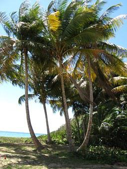 Puerto, Rico, Palm Tree, Beach, Island, Paradise, Ocean