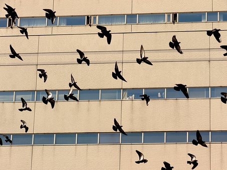 Dove, Pigeons, Bird, Flock, Flying, Flight