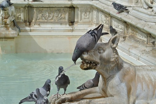 Italy, Fountain, Pigeons, Holiday, Travel, Architecture