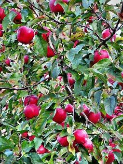 Apple, Red, Autumn, Hebstlich, Autumn Flowers