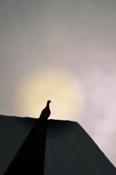Dove, Roof, Sunrise, Shadow, Nature, Pigeon, Sky, Peace