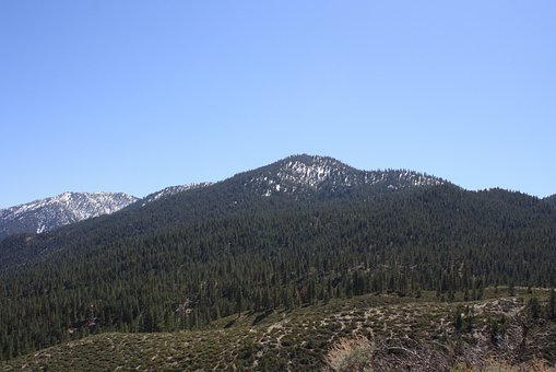 Mountains, Forest, Nature, Nevada, Scenery, Outdoor