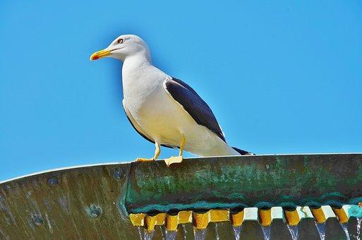 Sea Gull, Bird, Sky, Clouds, Building, On Top, Macro