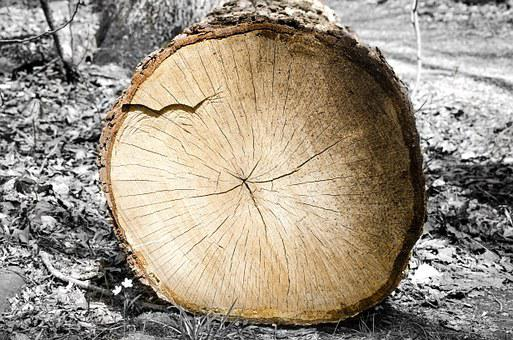 Wood, Log, Tree, Rings, Timber, Lumber, Wooden, Texture