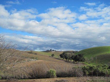 Vineyard, Winter, Wintry, Vine, Winegrowing, Vines