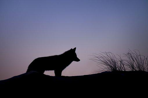 Animal, Canine, Dawn, Dusk, Hunter, Landscape, Light