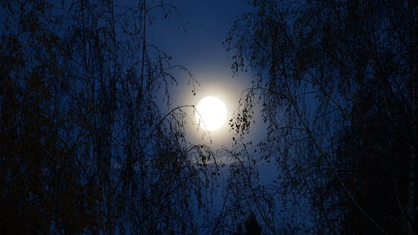 Night, Moon, Moonlight, Blue For A While, Twilight