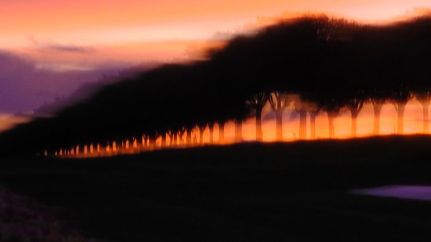 Silouette, Shadow, Light, Trees, Blurry, Nature