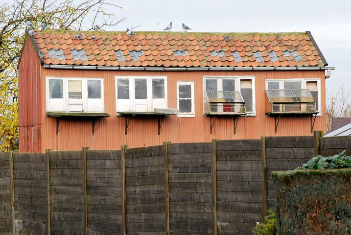Pigeons, Pigeon, Dovecote, Building