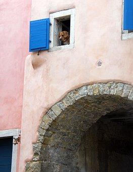 Alley, Home, Old, Croatia, Gorenj, Dog, Window