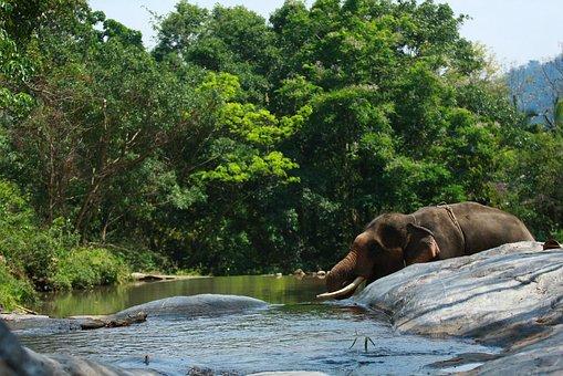 Elephant, Water, Mist, Wild, Nature, Wildlife, Animal