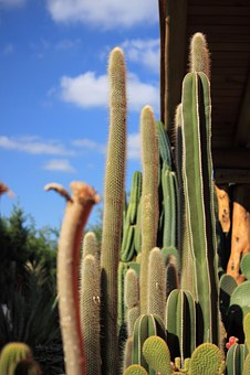 Cactus, Thorns, Desert, Plant, Spina, Thorny, Nature