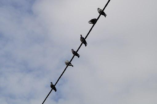 Pigeons, Power Line, Sit, Collect, Birds, Lines, Sky