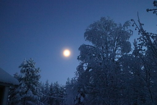 Moon, Moonlight, Blue For A While, Winter, Wood, Snow