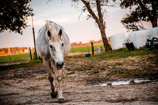 Animal, Countryside, Equine, Farm, Grass, Horse