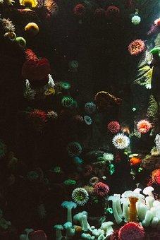 Anemone, Aquarium, Art, Color, Coral, Decoration