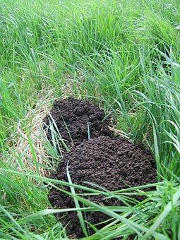 Molehill, Talpa Europaea, European Mole, Common Mole