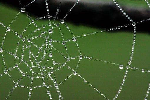 Spider Web, Web, Water, Drops, Dew, Cobweb, Spiderweb