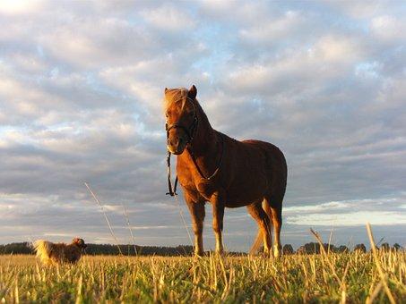 Horse, Pony, Nature, Cute, Ride, Riding, Equestrian